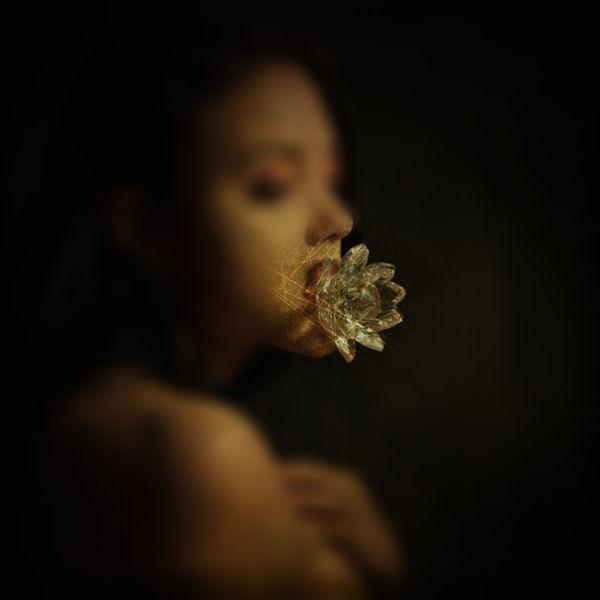 Lotus Flower New Album